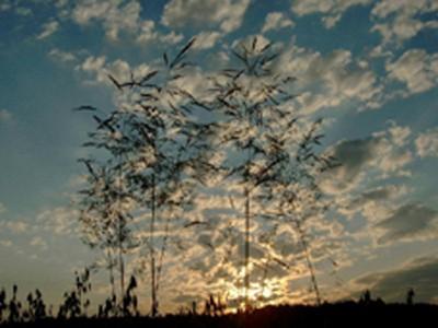 Hoa cỏ  -  Ảnh ĐQN