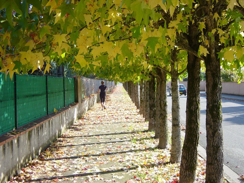 Chiều ngoại ô Toulouse