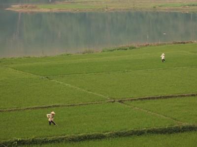 đồng ruộng vùng hồ Ba Bể  -  ảnh PQV
