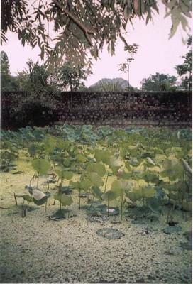Sen  -  Ảnh PQV  - 04/2007