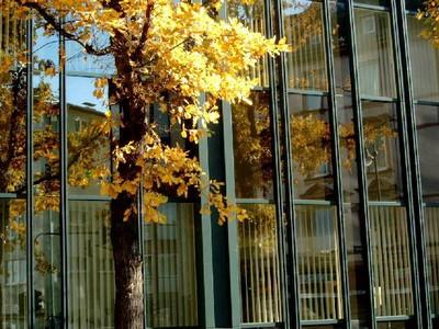 Mùa thu bên cửa sổ