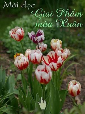 Tulipe-souris.jpg